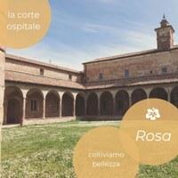 """""""Rosa. Coltiviamo bellezza"""" il nuovo progetto de La Corte Ospitale"""
